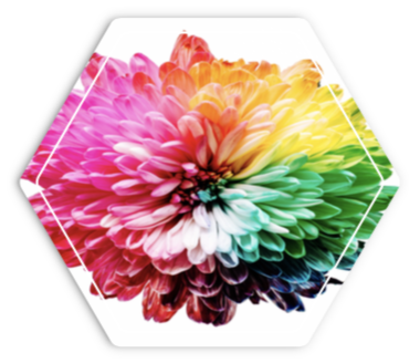hexagon graphic with a rainbow flower