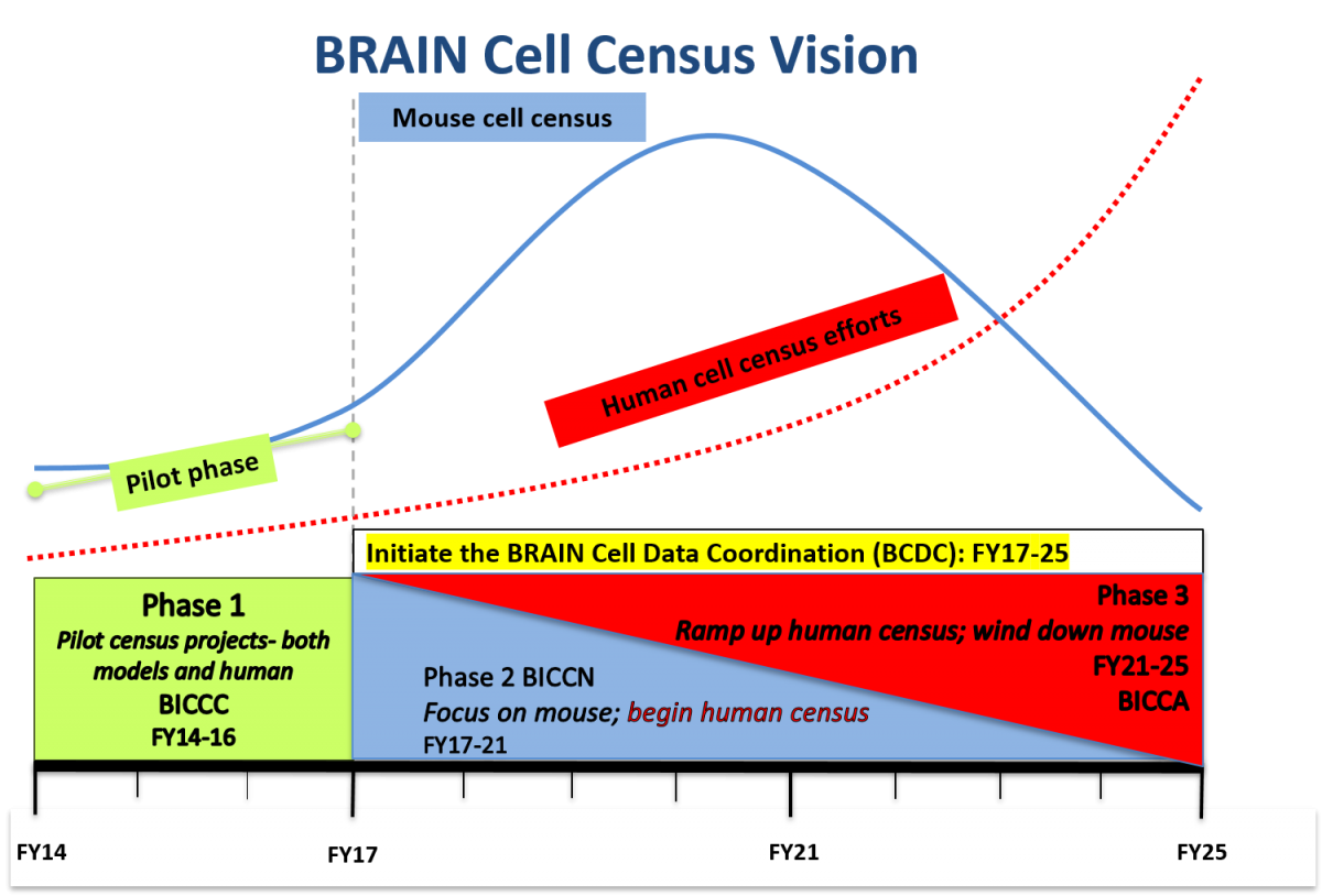 BRAIN Cell Census Vision through 2025 graph of phase and year: Phase 1: Pilot phase. Pilot census projects- both models and human, FY14-16. Then initiate the BRAIN cell data coordination (BCDC): FY17-25. Phase 2: Mouse cell census. Focus on mouse; begin human census, FY17-21. Phase 3: Human cell census efforts. Ramp up human census; wind down mouse, FY21-25